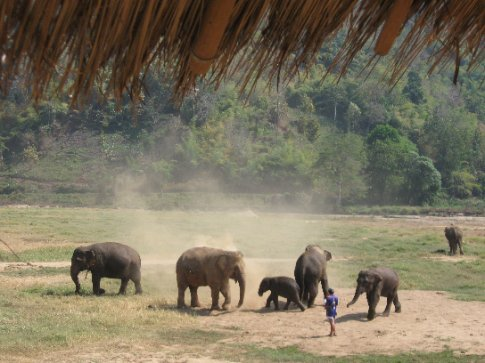 After a river bath they cover themselves with dirt to cool down and protect themselves from the sun