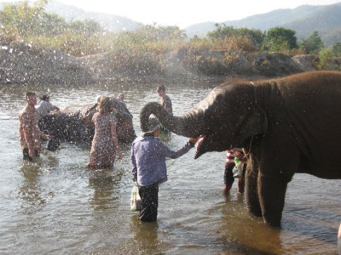 This playful elephant is spraying swimmers