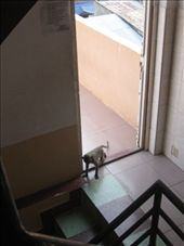 And then the monkey tried to come in.: by erin_and_pete, Views[207]