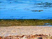 Low tide algae and seaweed exposed at Palo Seco, Puerto Rico.: by erosado9, Views[954]