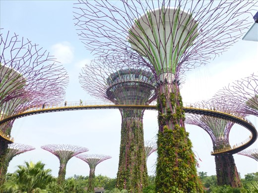 The SuperTrees and the SkyWalk