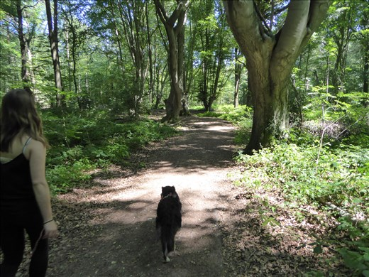 Walking in the forest with Kylie the dog