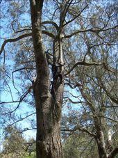 En nuestro camping ves lagartos como este...lo veis???: by evagore, Views[323]