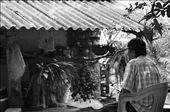 Maria is a grand mother.  Her children have all started families elsewhere. Maria's retired husband rests under a cool shade outside their home watching with slight nostalgia as she prepares a meal for us. : by exploration, Views[104]