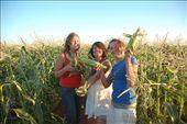 Somerset corn pickers: by faifailemu, Views[200]