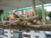 The birds in Baluarte Zoo, displayed for everyone to see; not caged but still otherwise restrained, a reminder of the way we mostly live: under scrutiny, not behind bars but still not completely free, bound by conventions . . .: by faradina, Views[366]