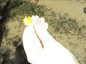 flower power: by fatimanaqvi, Views[237]