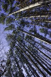 The Trees of Kenneglen Nature Preserve. East Aurora, NY: by fearlessmortal, Views[217]
