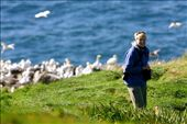 Gannet colony, St. Mary's : by fieldnotes, Views[206]