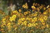 Corkscrew Audubon Refuge FL: by fieldnotes, Views[178]