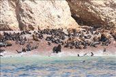 Sea lion nursery, Islas de Ballestas: by fieldnotes, Views[317]
