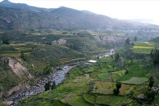 Inca terraces, Colca Canyon