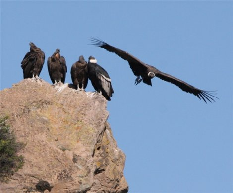 No room, Colca Canyon