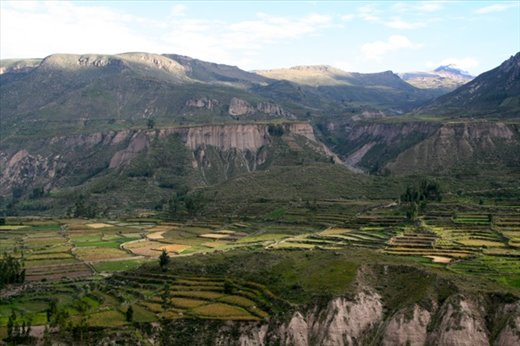 Terraces, Colca Canyon
