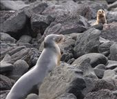 Searching for mom- Galapagos Islands: by fieldnotes, Views[208]