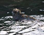 Coming ashore- Galapagos Islands: by fieldnotes, Views[143]