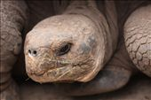 A real cutie, Isabela- Galapagos Islands: by fieldnotes, Views[189]