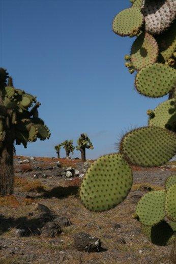 Santa Fe - Galapagos Islands