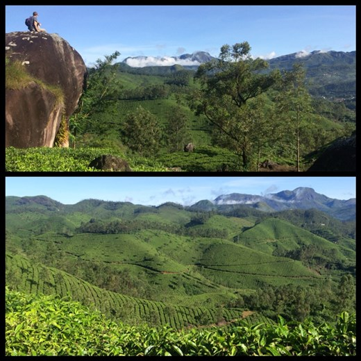Hike in the tea plantations of Munnar. There are tea plantations as far as the eye can see, unbelievable!