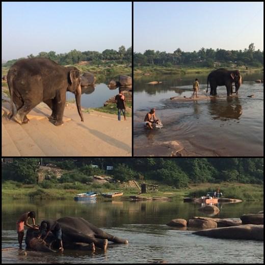 Nous avons participé au bain de l'éléphant d'un des temples de Hampi. Ça a duré plus d'une heure, il le nettoie à fond.