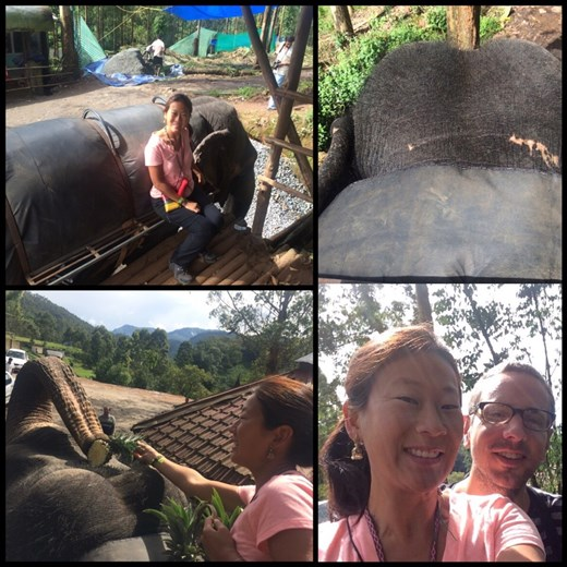 Promenade à dos d'éléphant à Munnar! Vaut mieux pas qu'il se mette à galoper. ;-)