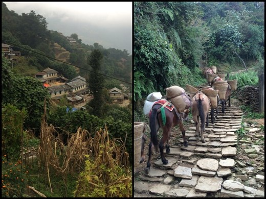 During our descent on the 3rd day. You see the authentic life of Nepali people in the Himalayas. These mules carry such heavy things up and down the steep mountains.