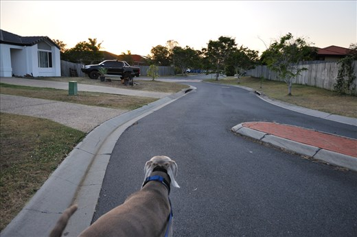 Last month, my family went away for a few days and Fiona came to look after me. In the early mornings and evenings, we would go to the dog park around the corner from my street.