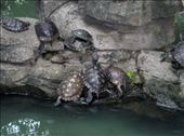 Chinese turtle convention.: by fishpaw, Views[118]