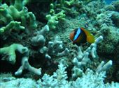 Finding Nemo #7: by fkasinsky, Views[260]