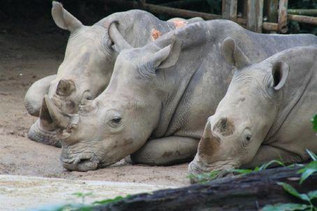 Singapore Zoo - Trio