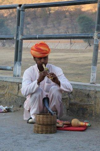 Jaipur, región de Rajasthan. Encantador de serpientes
