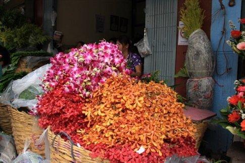 Orquídeas que se venden en ramo... Cada ramo cuesta 1 dólar A mí me costó un año que Ofelia (la planta que me regalaron Diana y Diego, me diera 1 flor...)