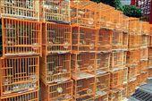Mercado de pájaros de Yuen Po Street: by flachi-gus, Views[407]