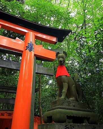Templo shioista dedicado al dios del comercio (cada torii o puerta naranja fue donada por un comerciante o empresa) Hay 4 km de toriis