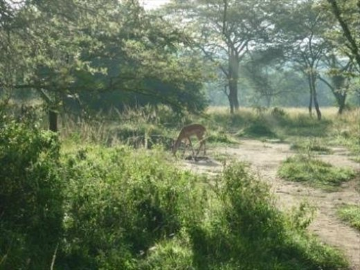 Sunrise walk through wetland and savanna/scrub