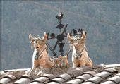 Bulls on the roof of many houses, for luck & prosperity: by flyingpiglet, Views[663]