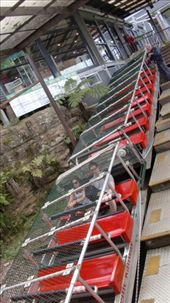 Now over to the Scenic Railway, the world's steepest inclined railway at 52 degree and a drop of 415 metres. The seats are angled so you face straight down and hold on tight... definitely lives up to its billing.: by flyted, Views[1732]