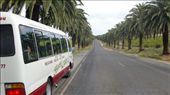 Our Groovy Grape tour bus pausing to admire the palm trees.: by flyted, Views[419]