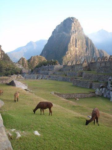 Convinced the animals are for the tourists.  Machu Picchu, Peru.