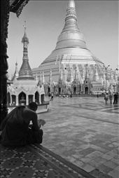 A monk studies Bhuddist scripture at the Shwedagon Pagoda in Yangon. : by fosterfoto, Views[226]