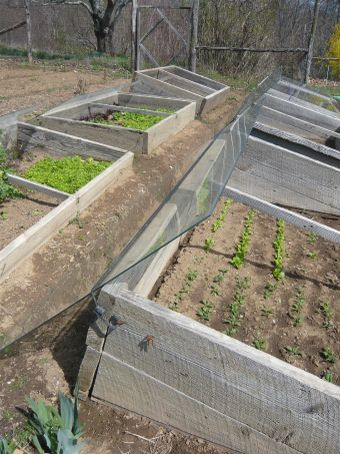 Cold frames with removable glass covers