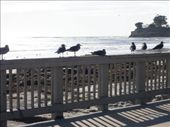 The birds were all in a row before I had the camera ready -- this looks less 'posed' ;-): by francesanddavid, Views[215]