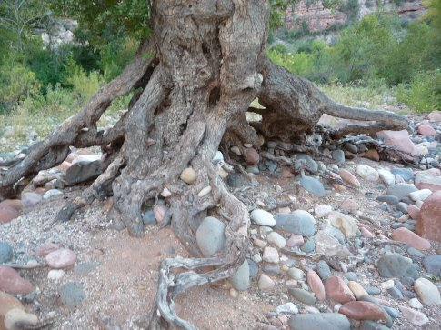 the wizard tree's routs and all the stones