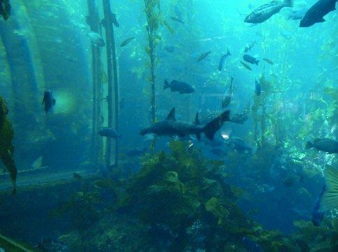 sharks in the aquarium in Monterrey