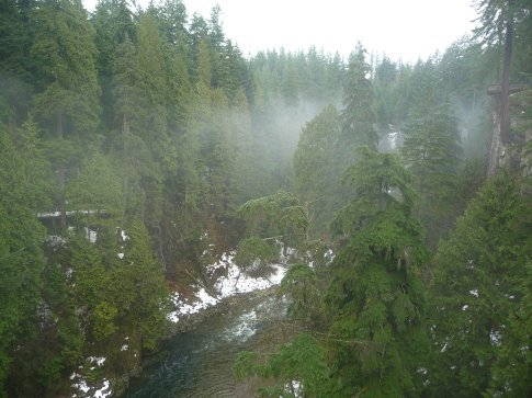the foggy forest and the drop below...