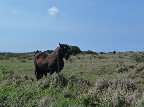 the horses of south point