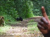 Charles our guides hand and the 1st chips we saw! right on our path too! they were grooming each other: by freedom-sparkles, Views[168]
