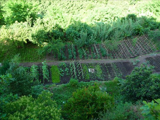 Inspiration! Some day soon..I'll have my own veggie patch and my own home!!!!