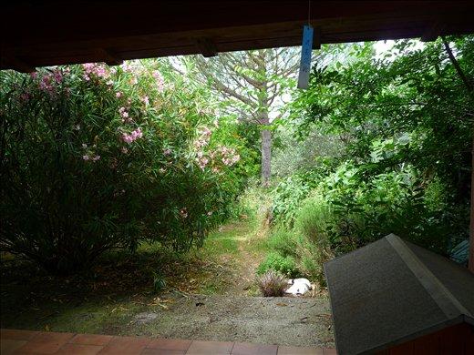 the view into the garden....