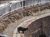 Rome - Take 2; A cat at the Colosseum: by frenchflower24, Views[250]